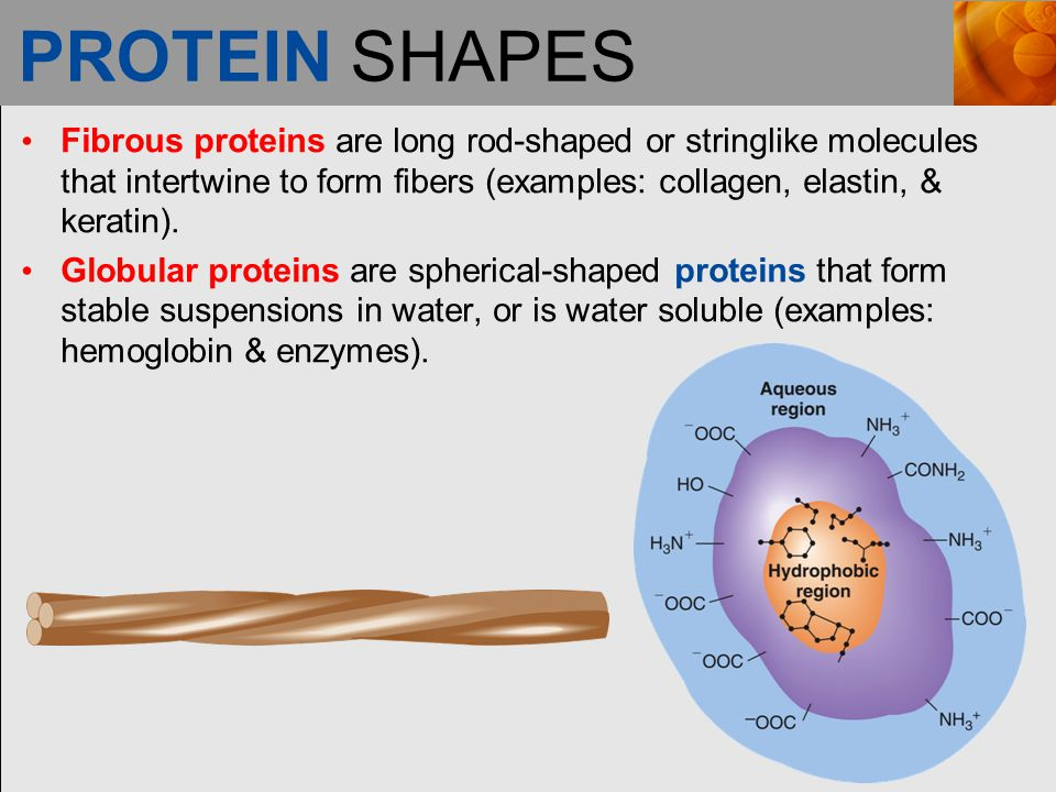 PROTEIN SHAPES Fibrous proteins are long rod-shaped or stringlike molecules that intertwine to form fibers (examples: collagen, elastin, & keratin).