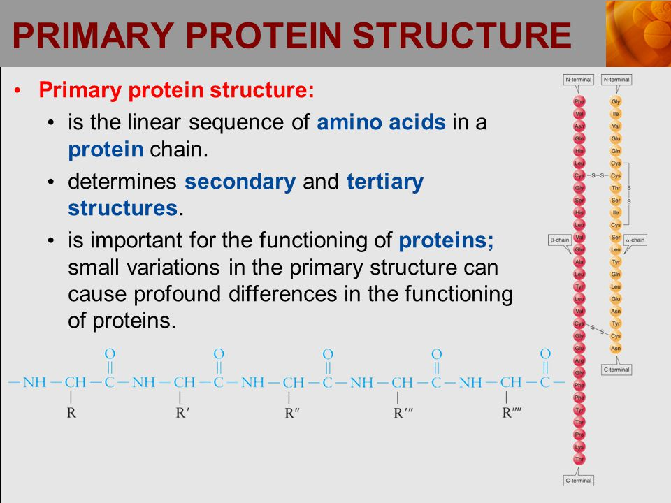 PRIMARY PROTEIN STRUCTURE