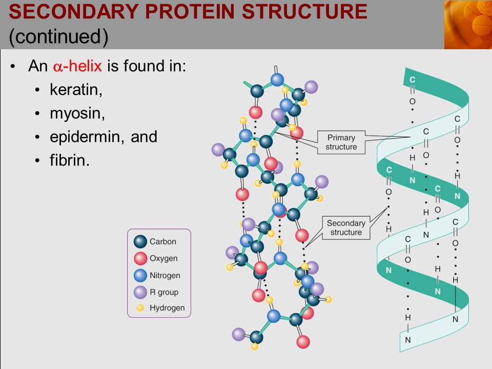 SECONDARY PROTEIN STRUCTURE (continued)