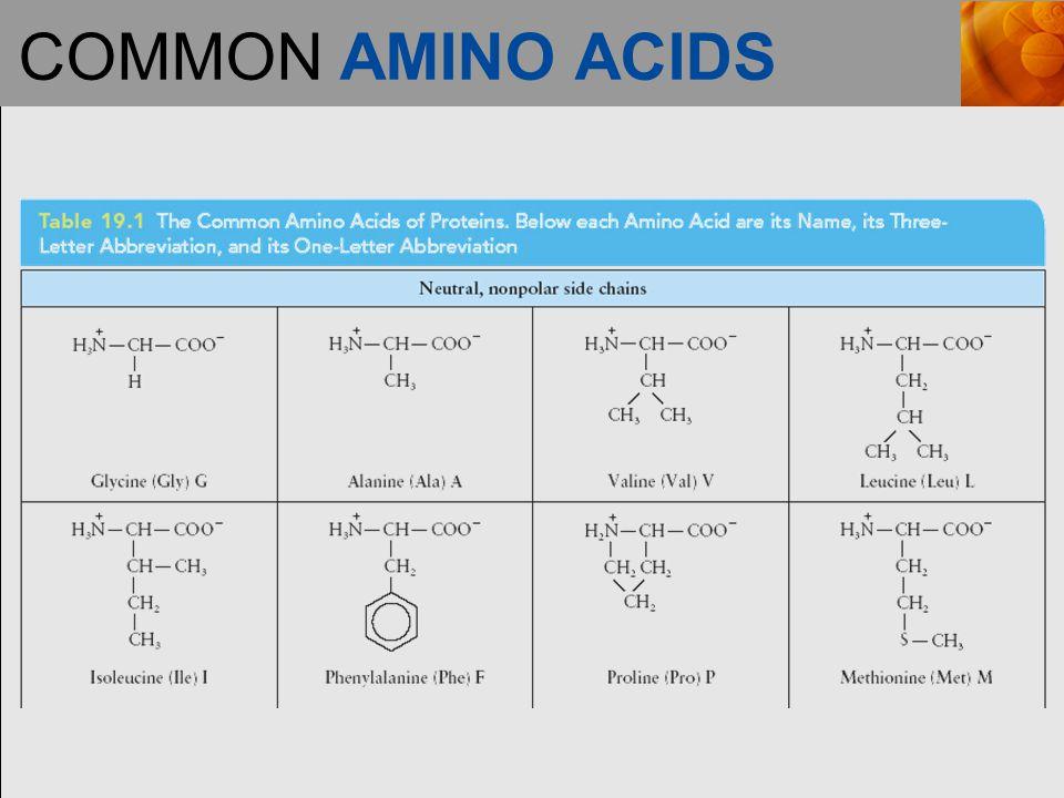 COMMON AMINO ACIDS