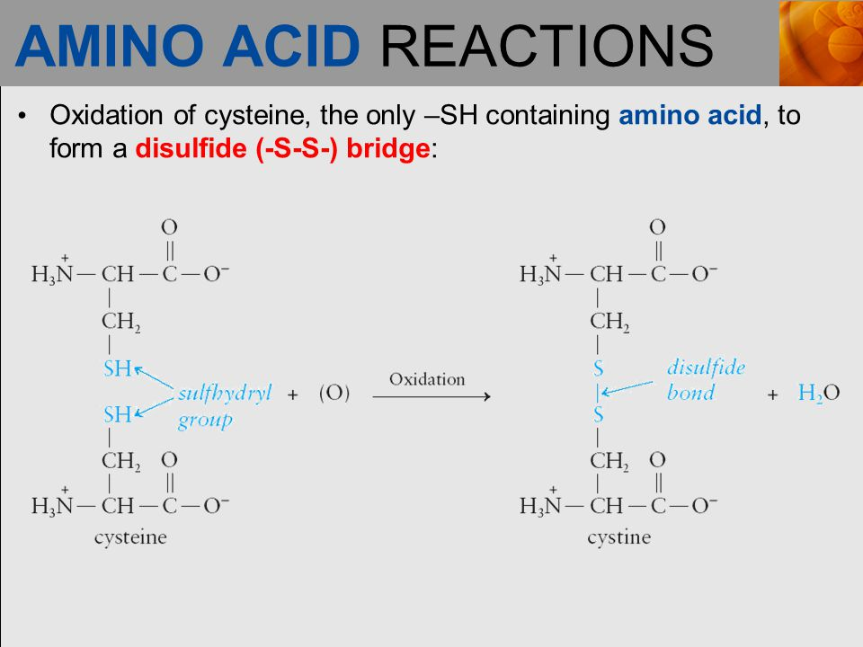 AMINO ACID REACTIONS Oxidation of cysteine, the only –SH containing amino acid, to form a disulfide (-S-S-) bridge:
