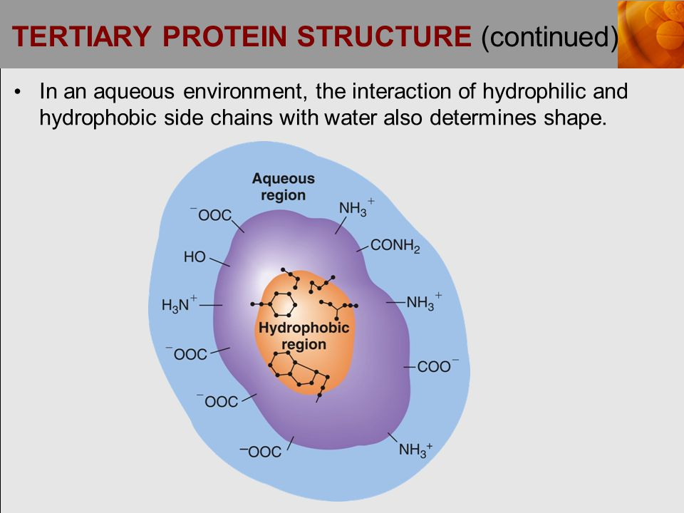 TERTIARY PROTEIN STRUCTURE (continued)