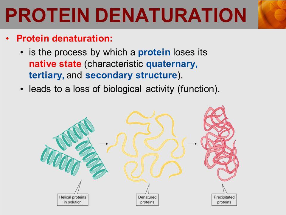 PROTEIN DENATURATION Protein denaturation:
