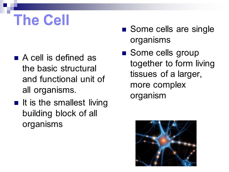 What Are Fundamental Unit Building Block Of Organisms