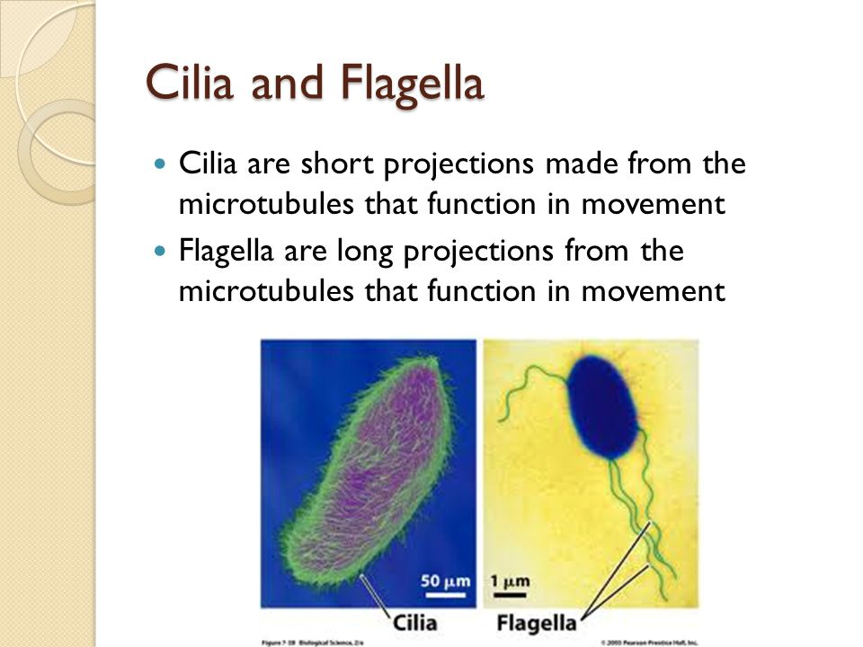 Chapter 7 Cell Structure and Function - ppt video online ...