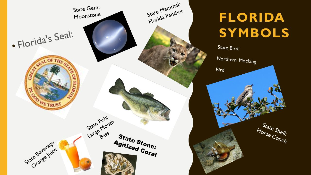 Nickname the sunshine state ppt video online download 3 florida symbols floridas seal state buycottarizona Gallery