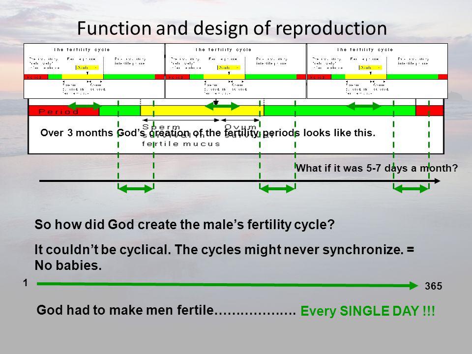 God s original design for sex ppt download for Design reproduktion