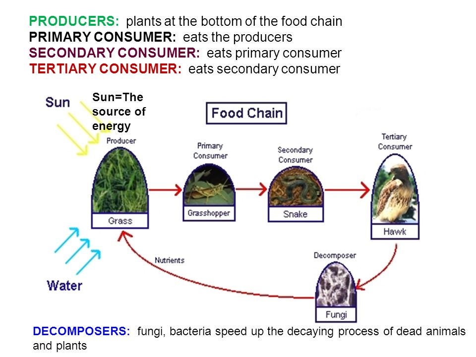Consumer Goods Processing Plants : Food chain web a shows how each living