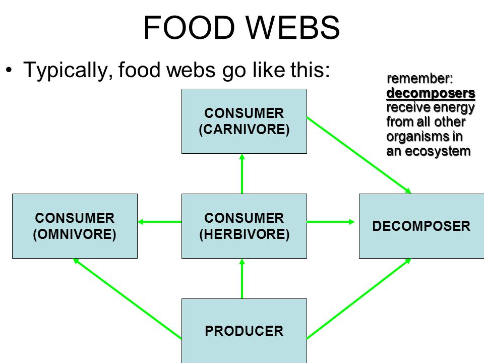 how to create a food chain online