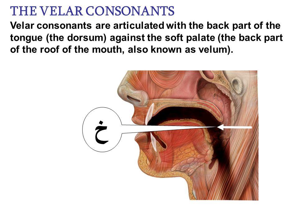 Perfecto Roof Of The Mouth Anatomy Composición - Imágenes de ...