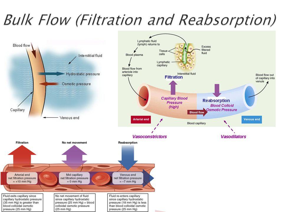 Bulk flow hypothesis