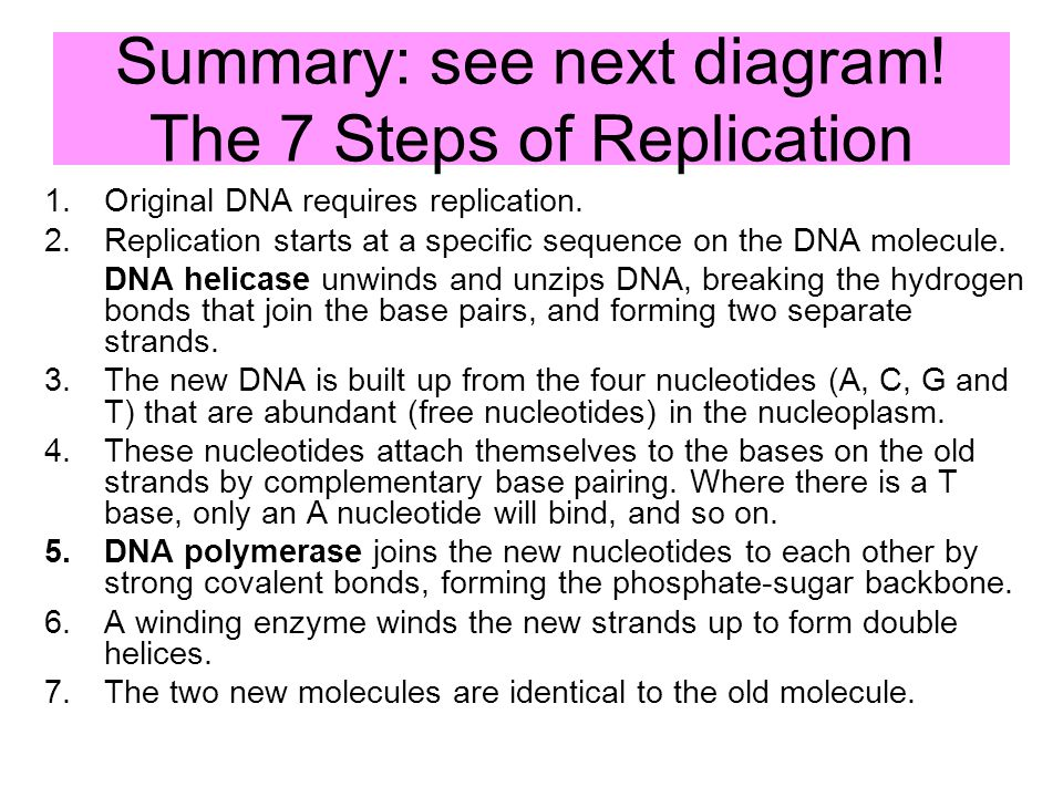 Chapter 9 chromosomes and dna replication ppt download summary see next diagram the 7 steps of replication 35 dna replication ccuart Choice Image
