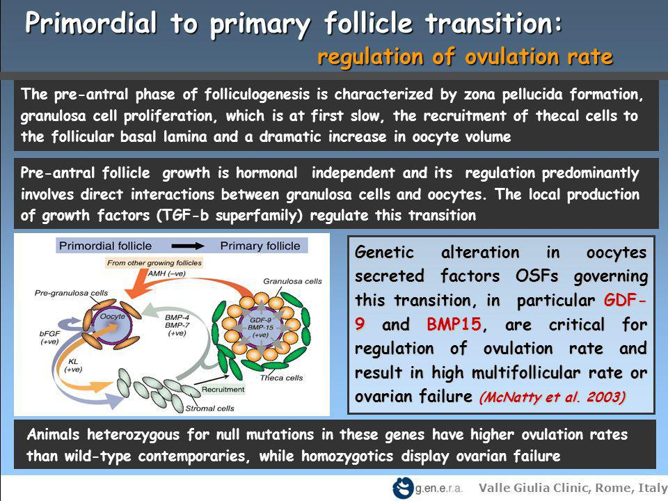 Primordial to primary follicle transition: