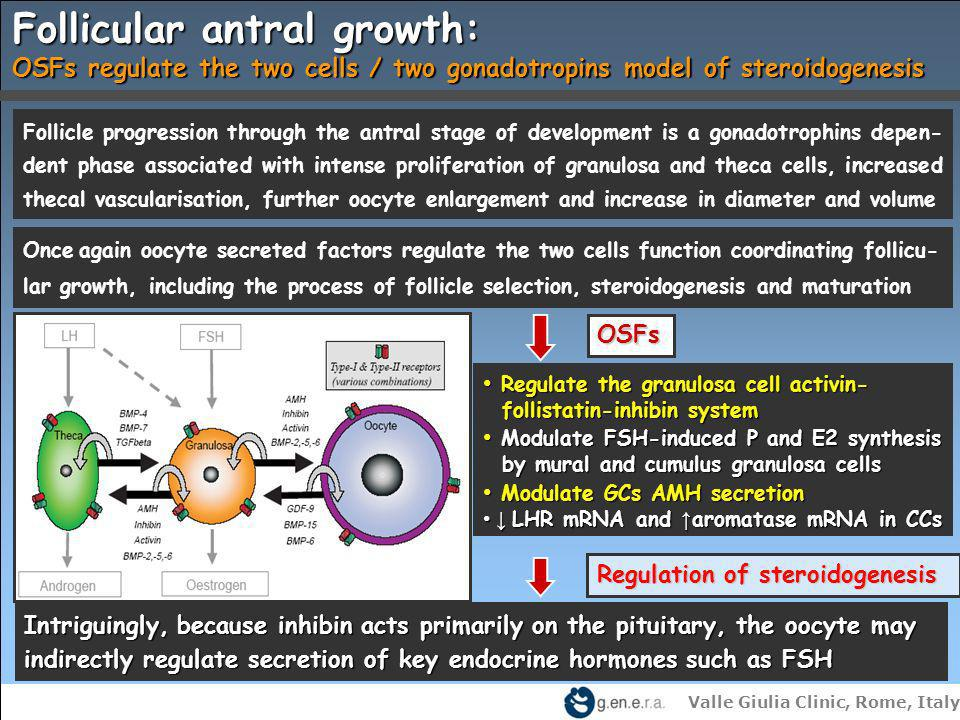Follicular antral growth: