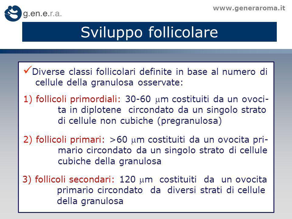 Sviluppo follicolare www.generaroma.it. Diverse classi follicolari definite in base al numero di. cellule della granulosa osservate: