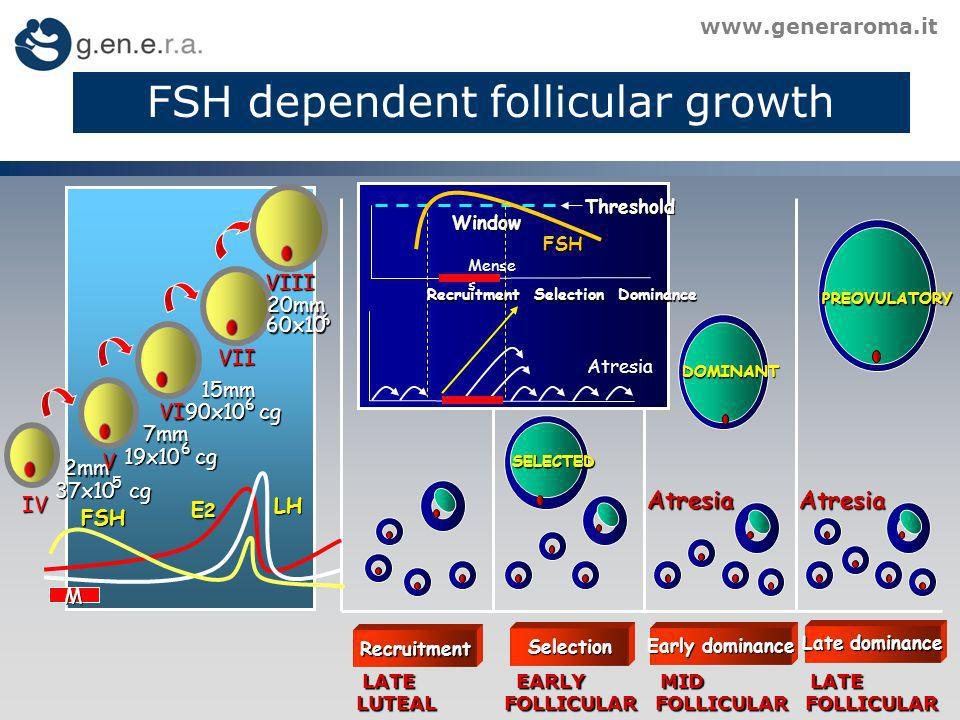 FSH dependent follicular growth