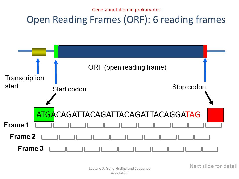 Attractive Open Readin Frame Festooning - Frames Ideas - ellisras.info