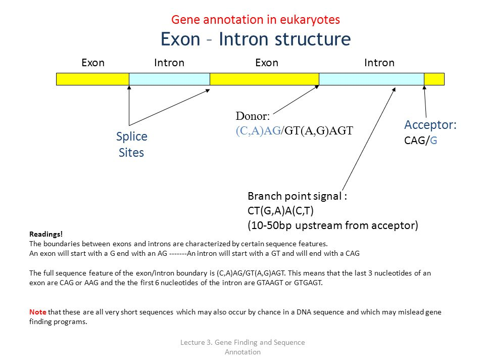 how to get sequence of specific exon