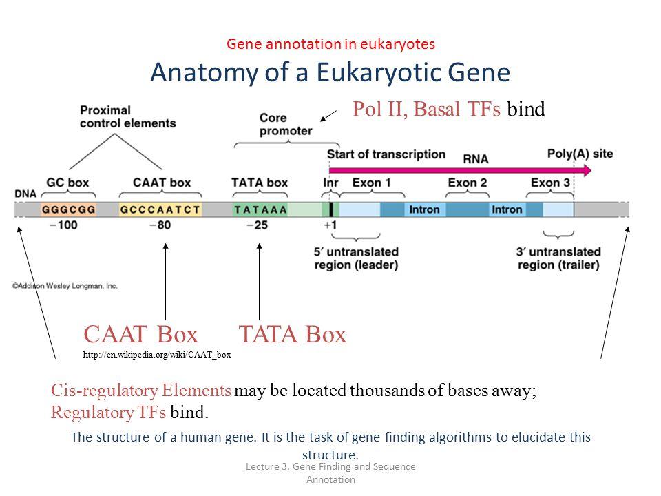 Anatomy Of A Gene Images - human body anatomy
