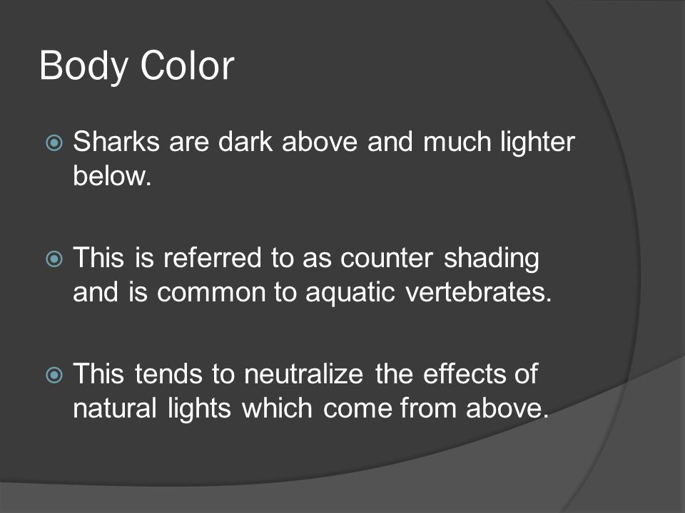 Body Color Sharks are dark above and much lighter below.
