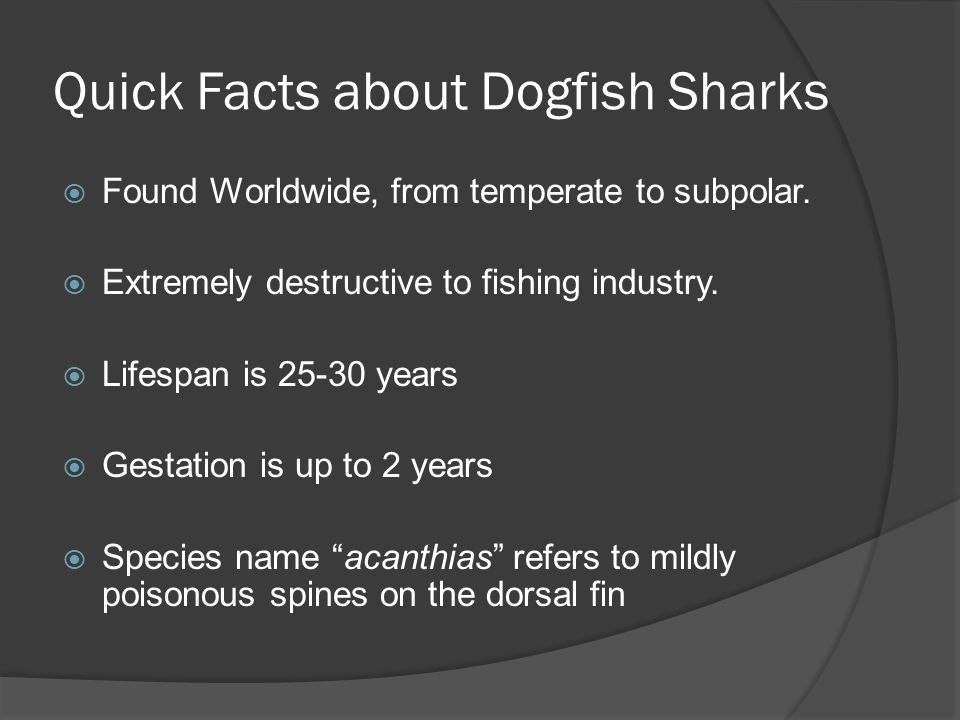 Quick Facts about Dogfish Sharks