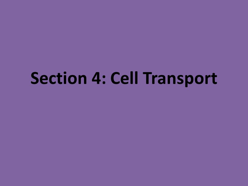 Section 4: Cell Transport
