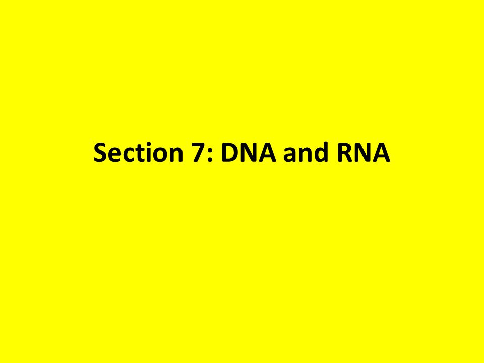 Section 7: DNA and RNA