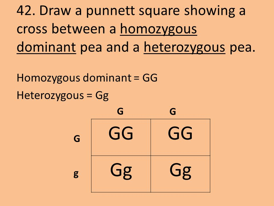 42. Draw a punnett square showing a cross between a homozygous dominant pea and a heterozygous pea.