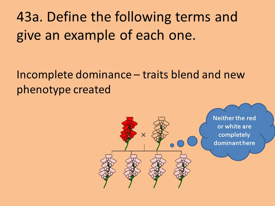 43a. Define the following terms and give an example of each one.