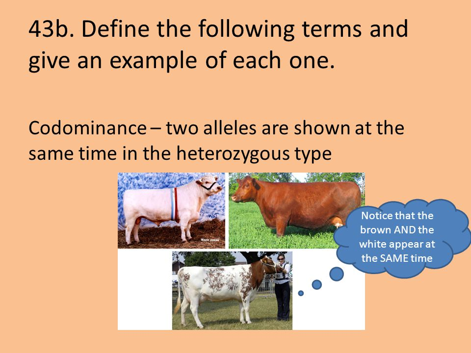 43b. Define the following terms and give an example of each one.