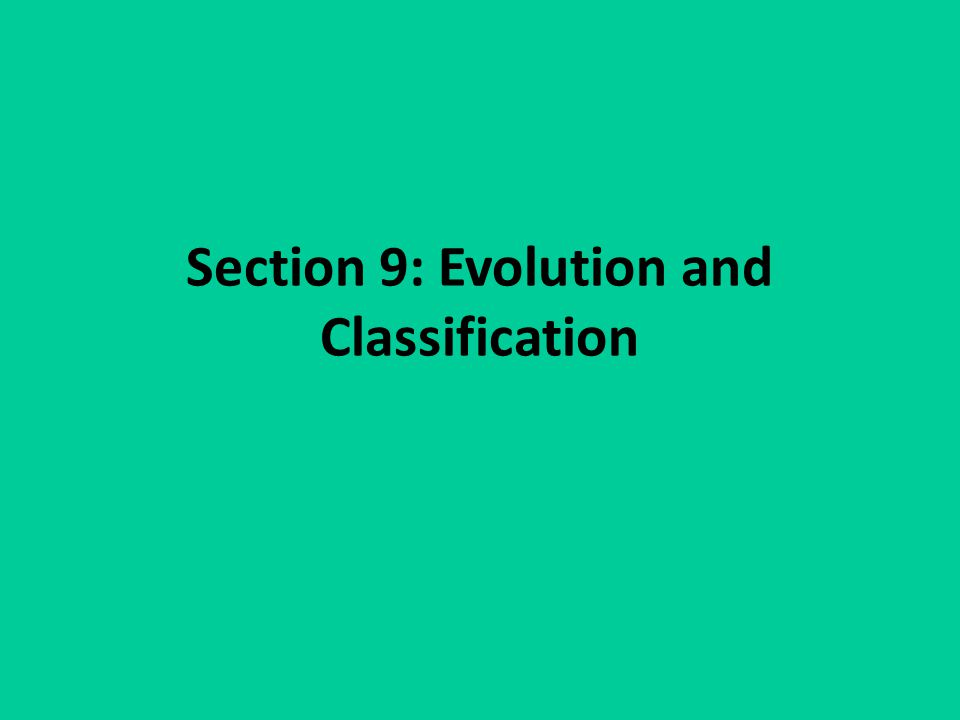 Section 9: Evolution and Classification