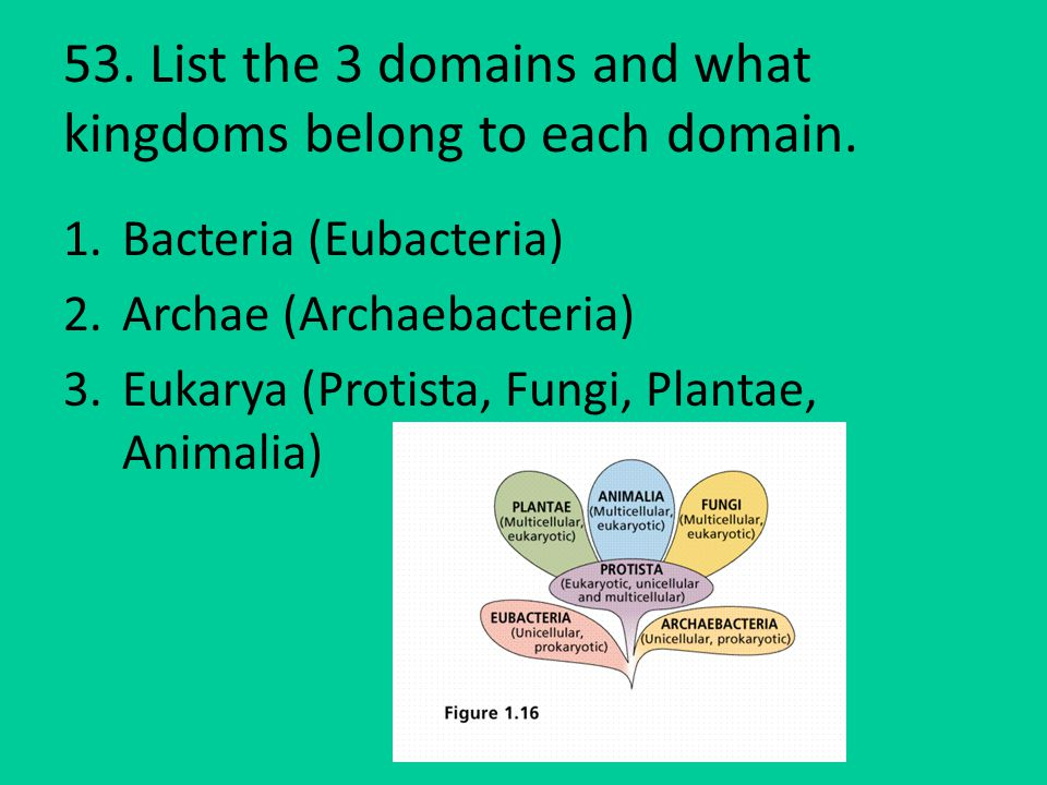 53. List the 3 domains and what kingdoms belong to each domain.