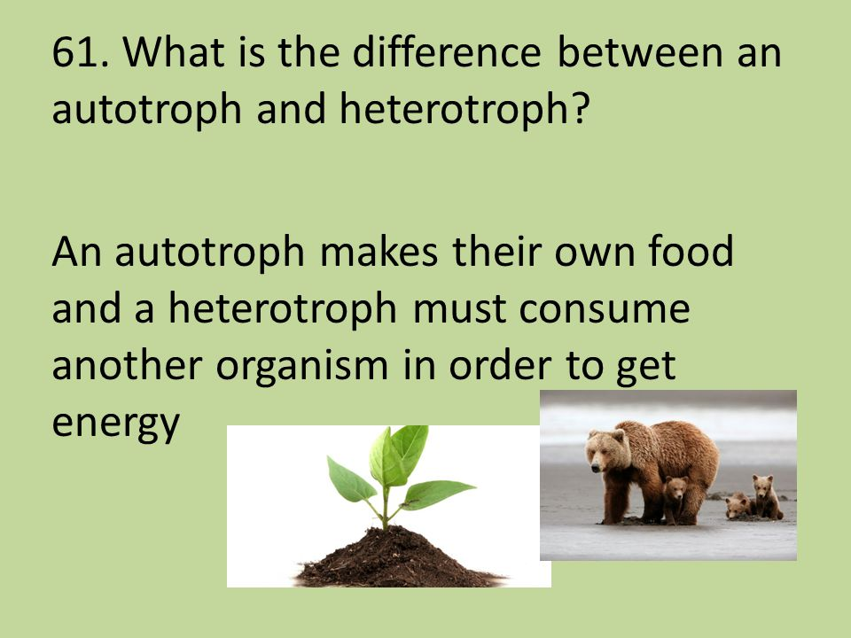 61. What is the difference between an autotroph and heterotroph