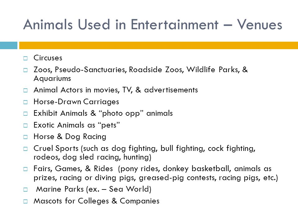 exotic animals in entertainment the pros The exotic pet trade is big business and many animals pay the price learn about what you can do to help stop animal victims of pet shops and dealers.