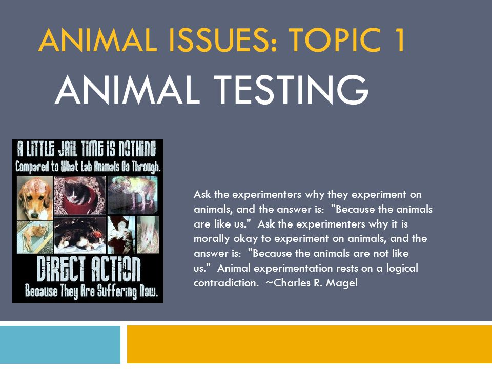 the christian perspective on the issue of animal experimentation in medical research In order to understand, even briefly, the ancient thoughts towards vivisection and experimentation on live animals, it is essential to remove oneself from the thoughts of today and approach the subject matter with the knowledge and beliefs of the time period the christian church subscribed to the view that.