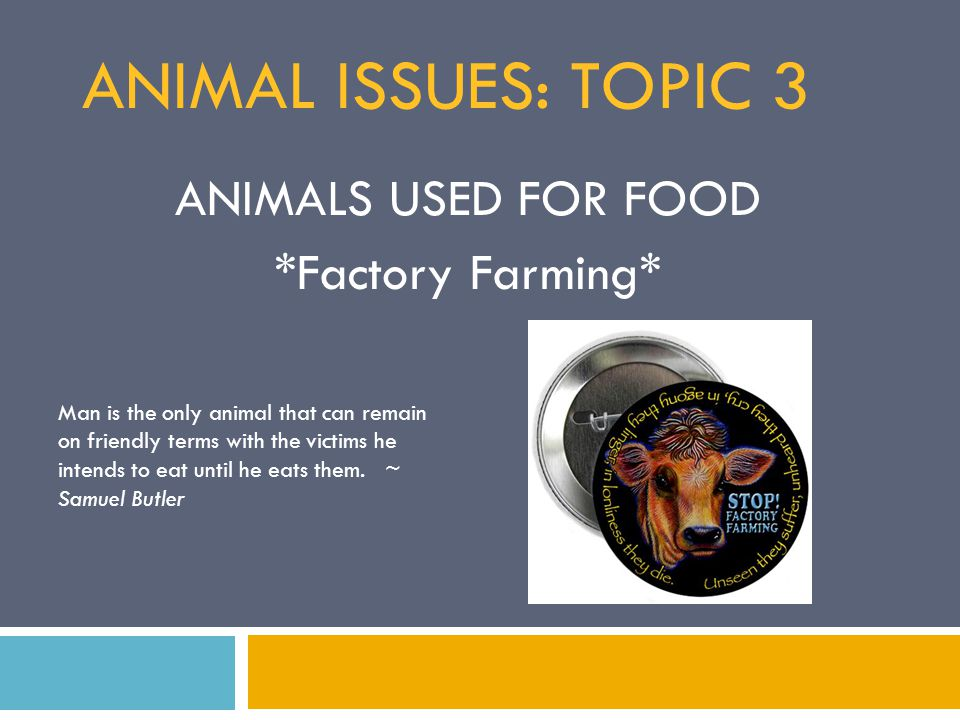 the moral and ethical issues with concentrated animal feeding operation Ethics and climate change in asia and the pacific (eccap) project  us for  example, the creation of concentrated animal feeding operations (cafos) has.