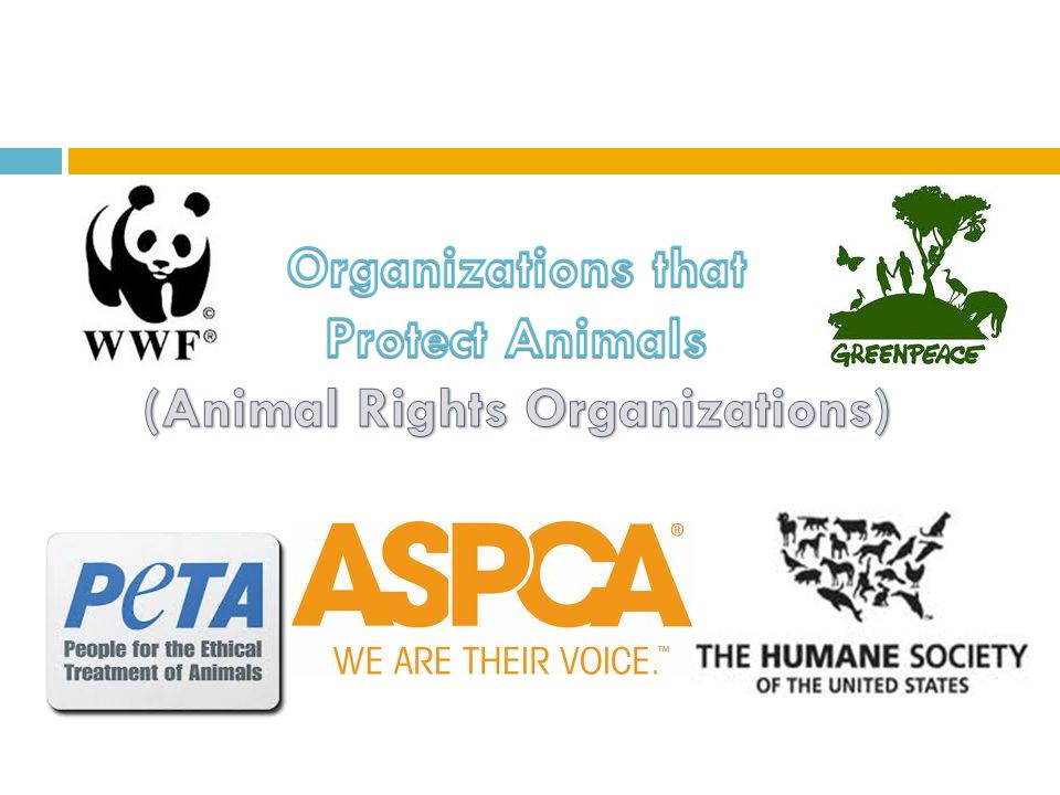 The work of organizations protecting animal rights