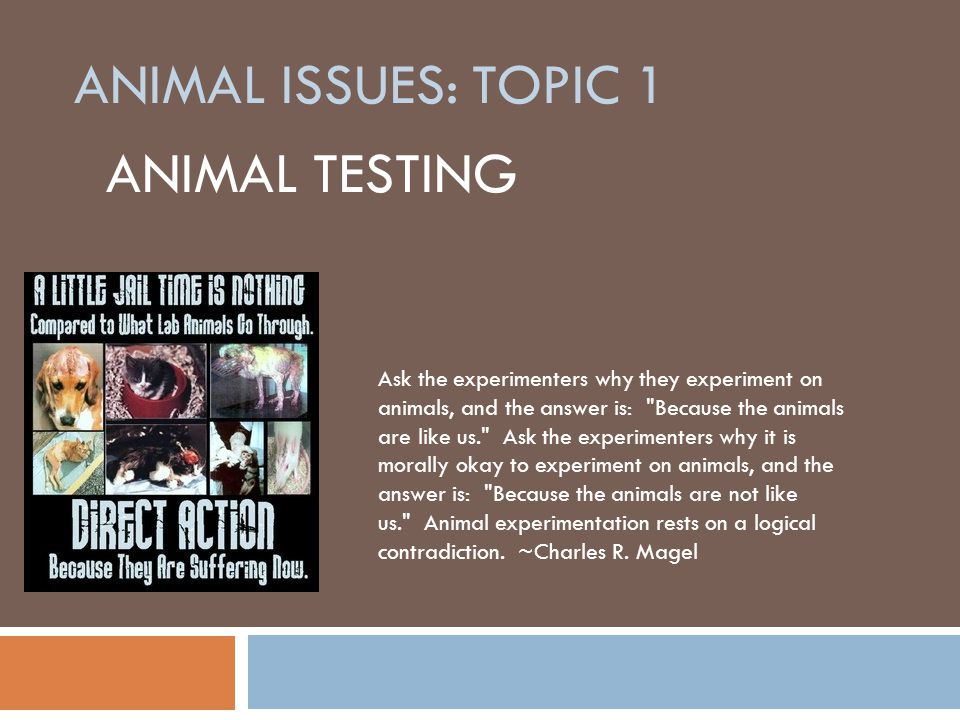animal testing what is more evil One of the justifications for animal testing in the field of research, is that animals are more sensitive to changing conditions (be it a change in habitat or environment) and their sensitivity factor helps in acquiring accurate results in research of antibiotics and medicines.