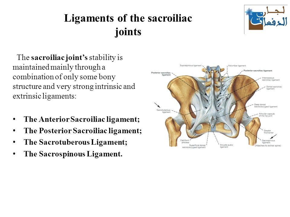 Famous Sacroiliac Joint Ligaments Anatomy Picture Collection