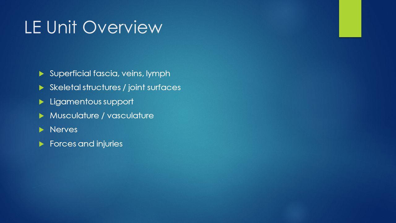 Osteology, ligaments, gluteal musculature - ppt video ...
