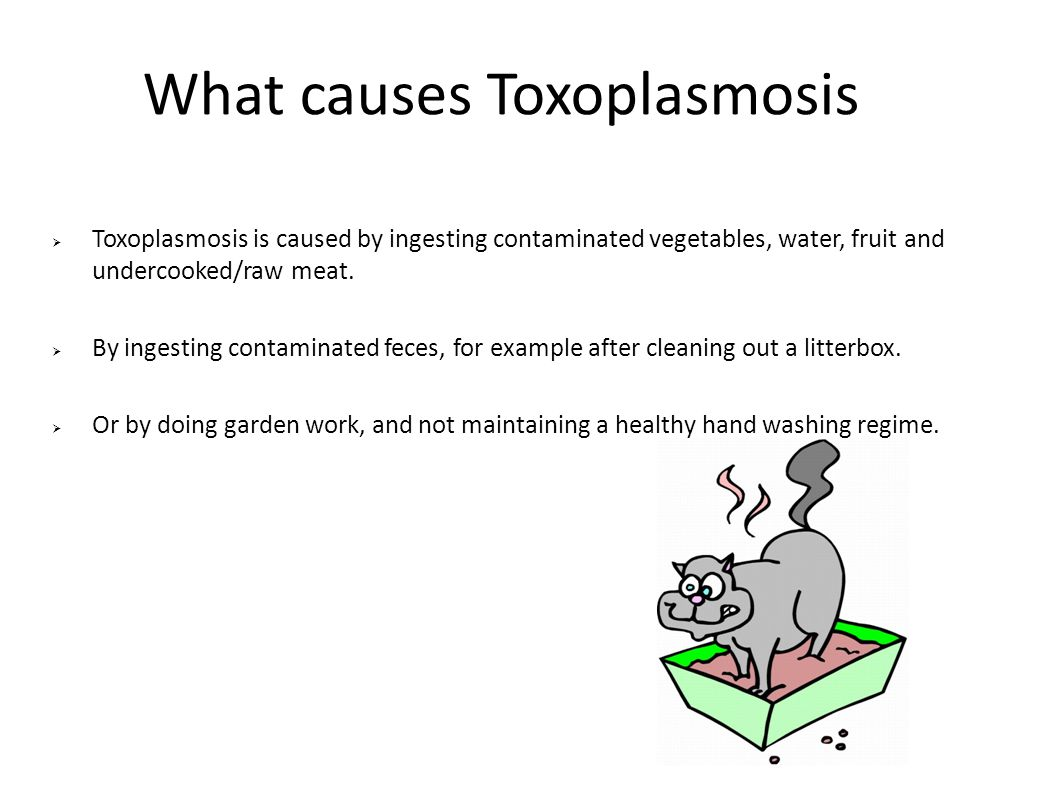 What causes Toxoplasmosis