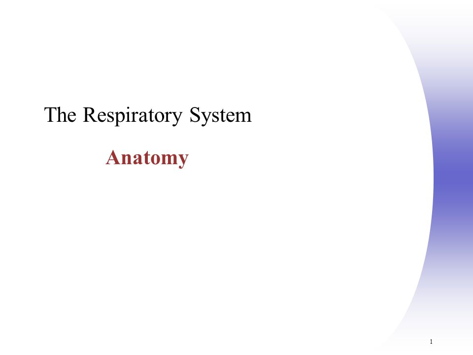 The Respiratory System Anatomy - ppt video online download