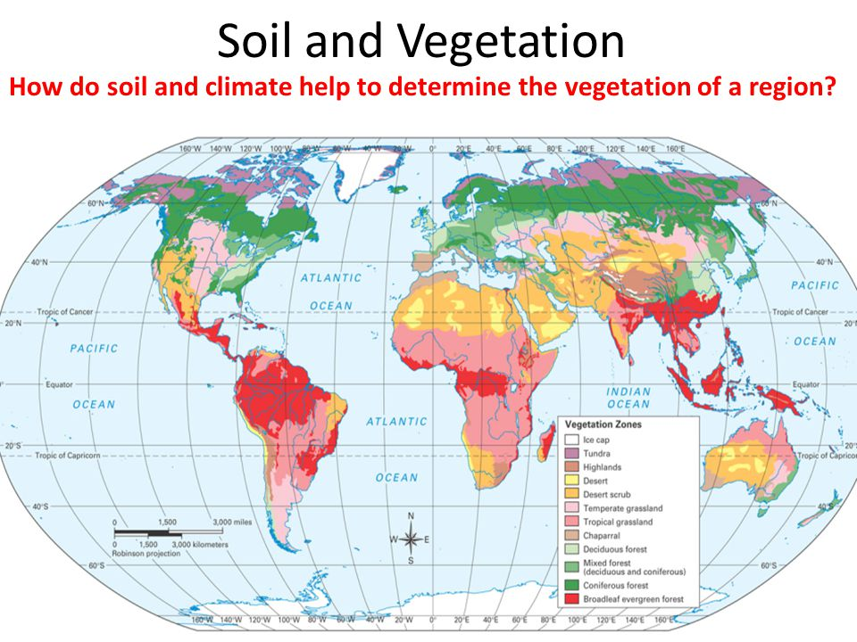 An analysis of the regions of vegetation