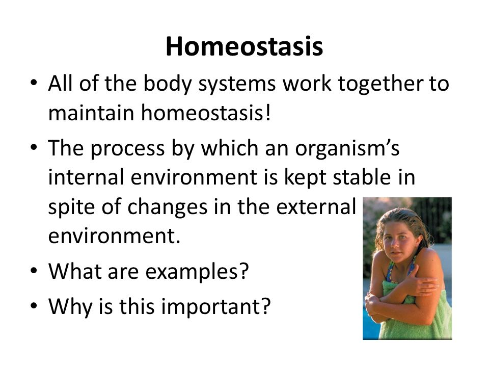 body systems work to maintain homeostasis Systems work alone and with other systems to allow your body to maintain homeostasis homeostasis is a stable internal environment that allows you (and your.