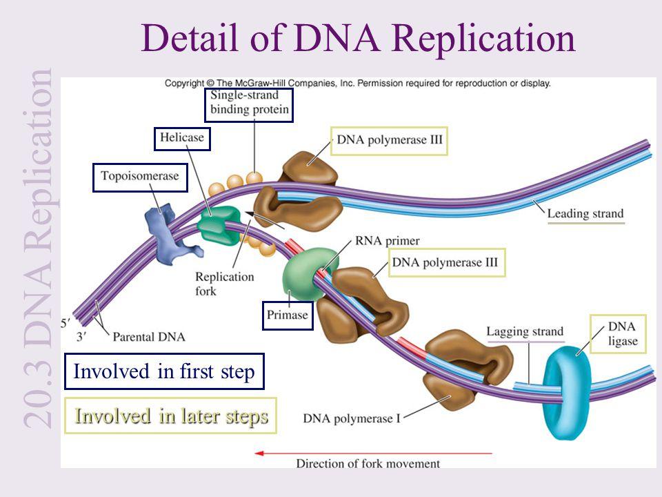 Introduction To Molecular Genetics