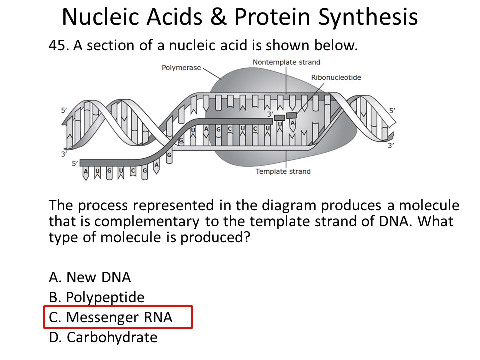 acid nucleic sythesis A free online book on the chemistry and biology of nucleic acids, written by prof tom brown and dr tom brown (jr.
