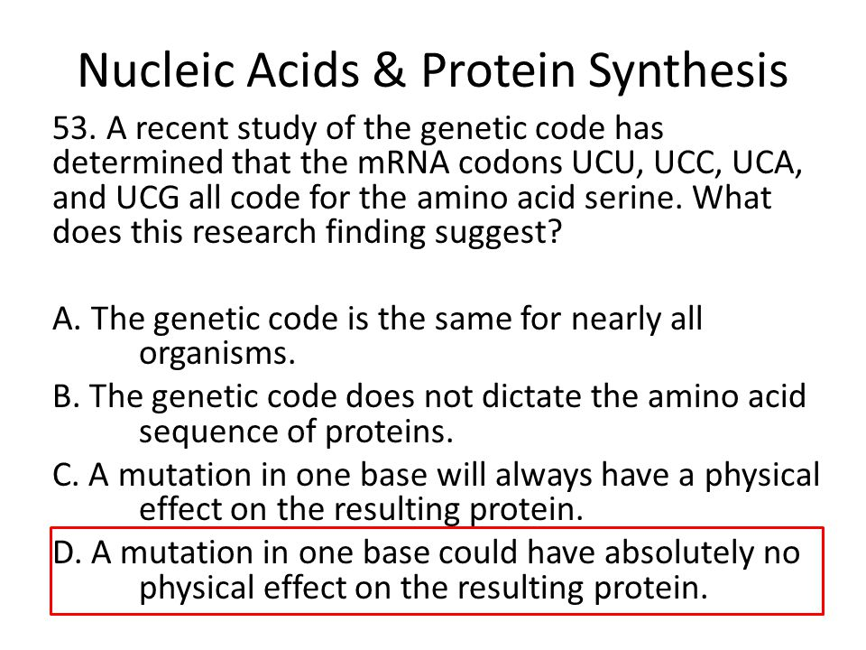 relationship of protein and nucleic acid