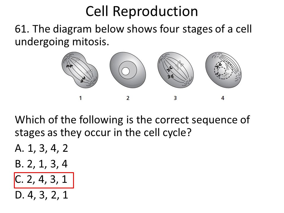mitosis and protein synthesis Mitosis, protein synthesis, and meiosis fertilization takes place as the female egg, carrying 23 chromosomes, unites with the male sperm, also carrying 23 chromosomes a zygote – a single fertilized cell.