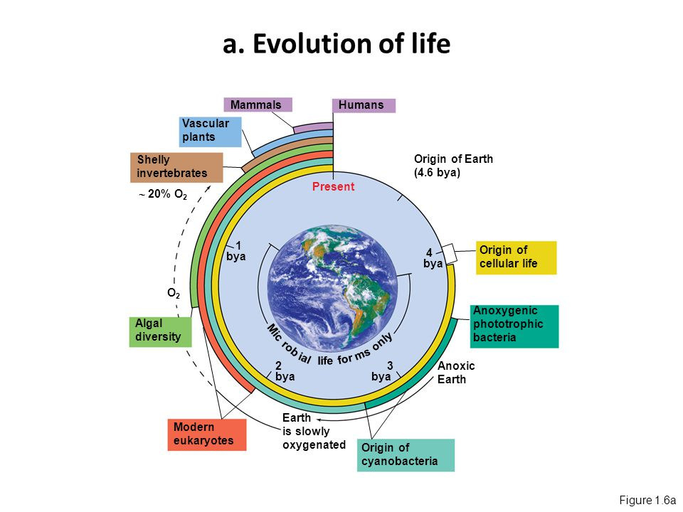 Origin life earth essay