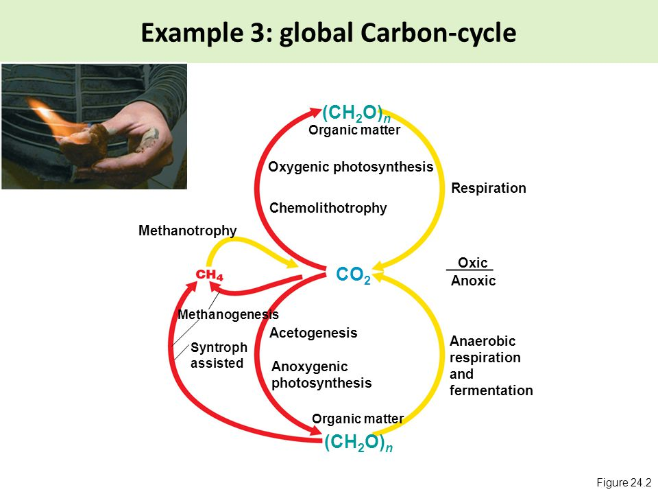 microbiology why study microbiology evolution of life